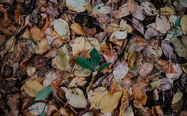 Wisconsin Gardener's Tips for November