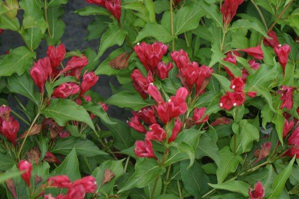 Wisconsin Gardeners' Seasonal Monthly Tips for April