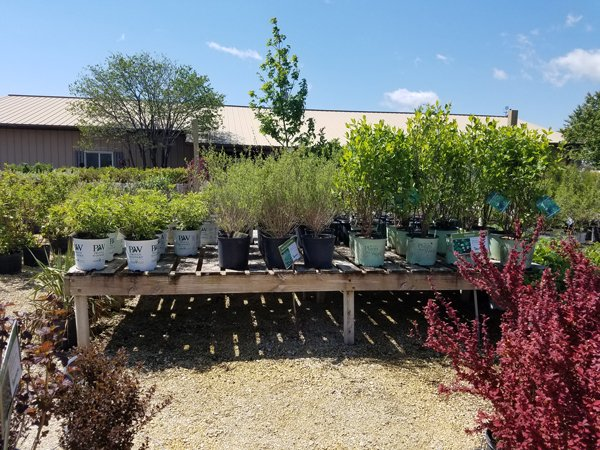 Wisconsin Gardeners' Seasonal Monthly Tips for May