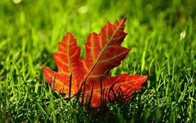 Wisconsin Gardner's Seasonal Monthly Tips for October 2020