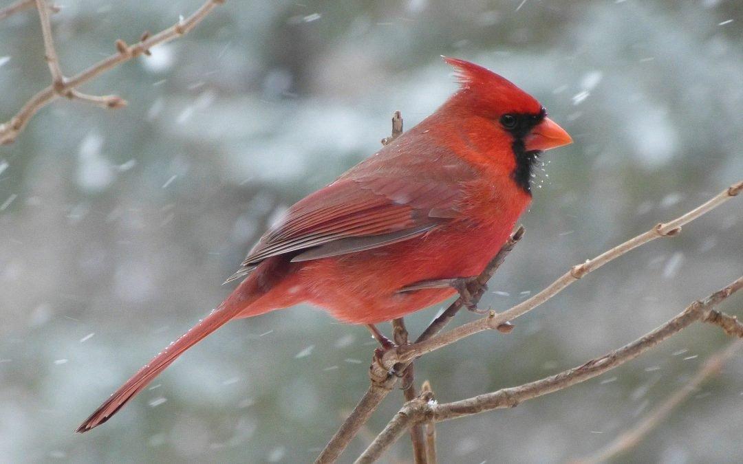 Wisconsin Gardner's Seasonal Monthly Tips for December 2020